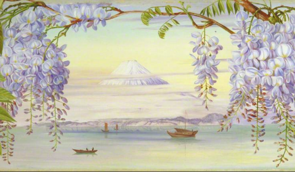 Distant view of mount Fujiyama Japan and Wistaria – Marianne North