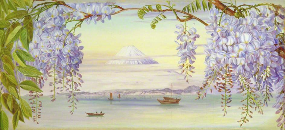 Distant view of mount Fujiyama Japan and Wistaria - Marianne North