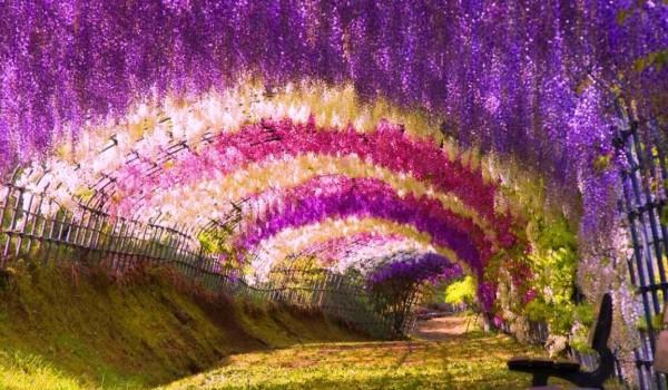 wisteria-garden-tunnel